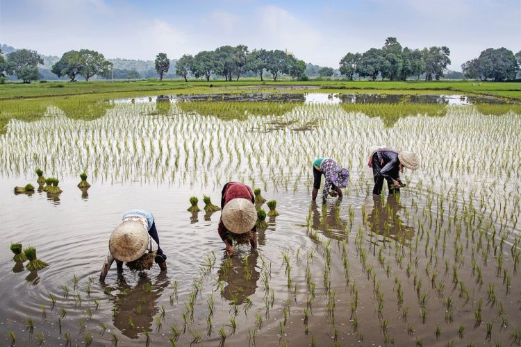Тяжелый труд вьетнамских фермеров