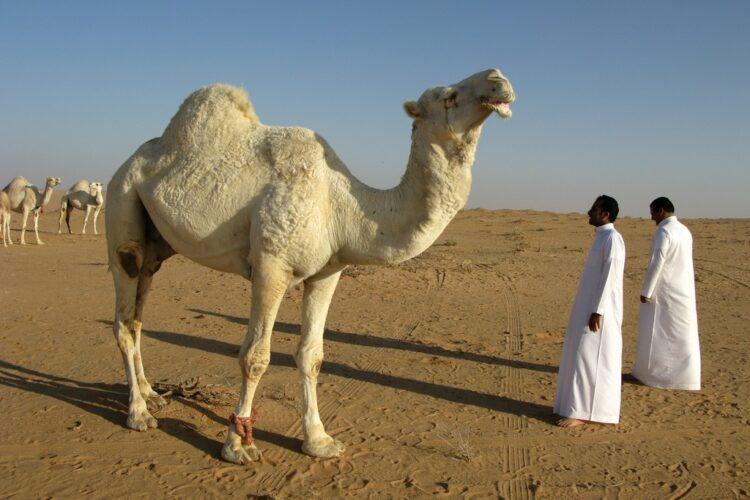 Пенсионный возраст в Саудовской Аравии