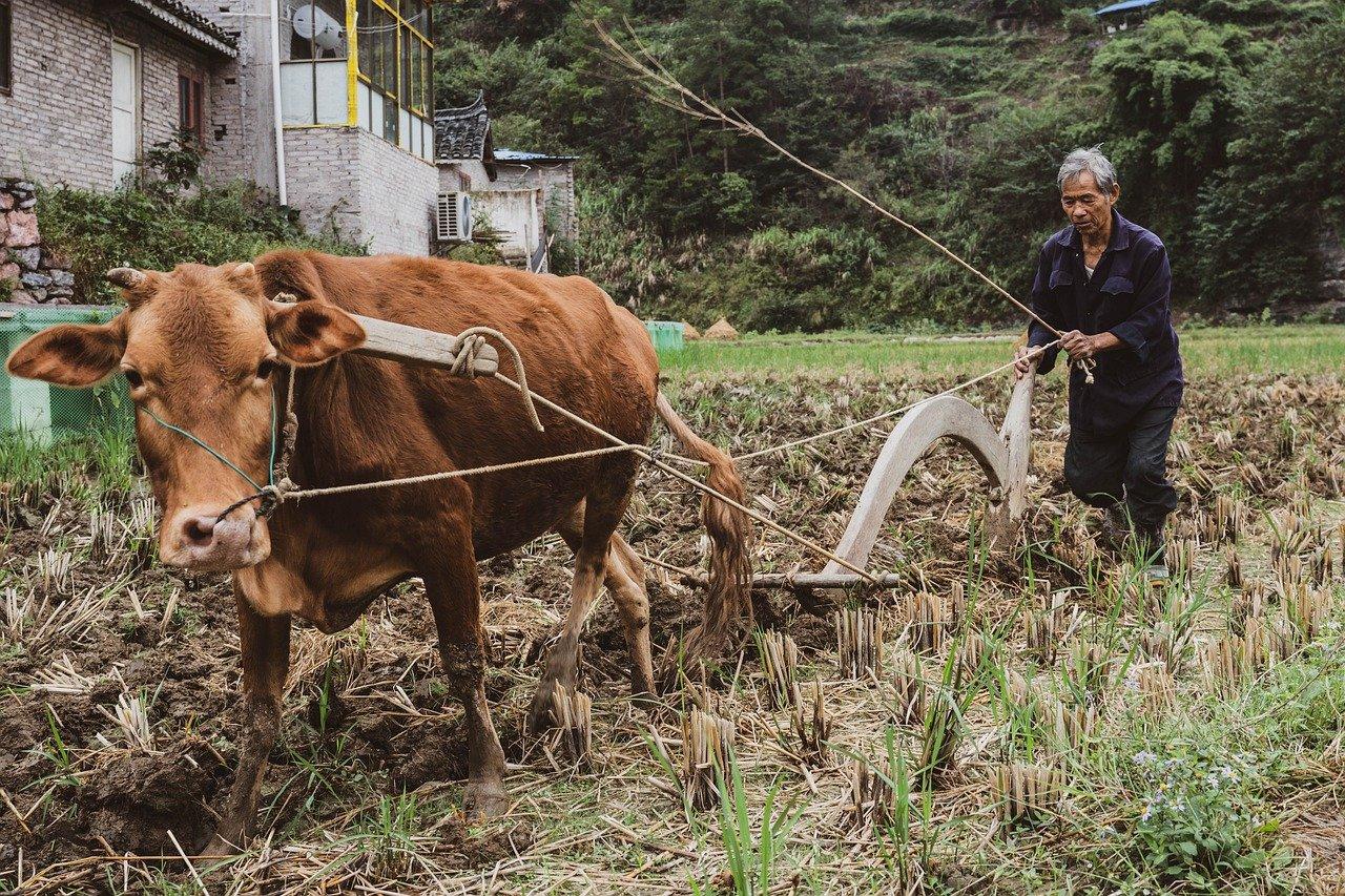 МРОТ в Китае зависит от сложности работы