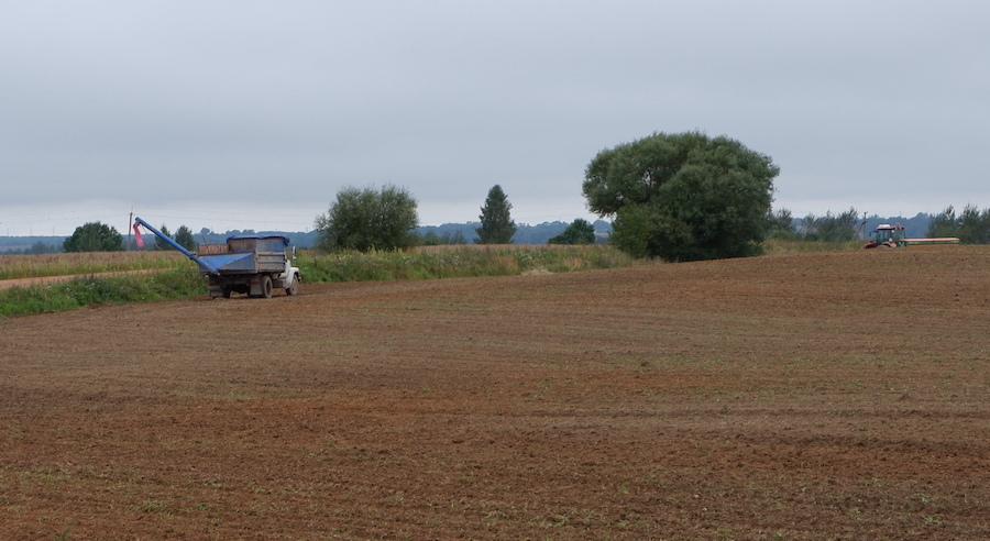 Рапсовое поле в Смоленской области