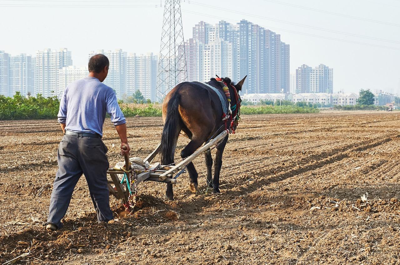 Экономика, сельское хозяйство, урбанизация
